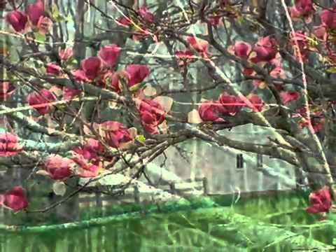 Teri Yaadon Mein - Nafees Song - BBC Music