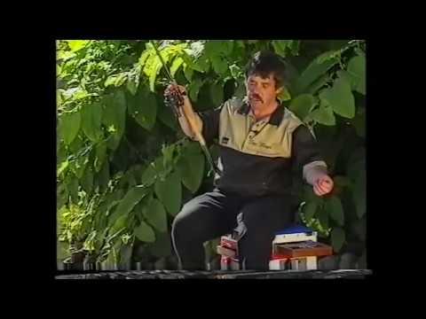 Ian Heaps Slider Fishing
