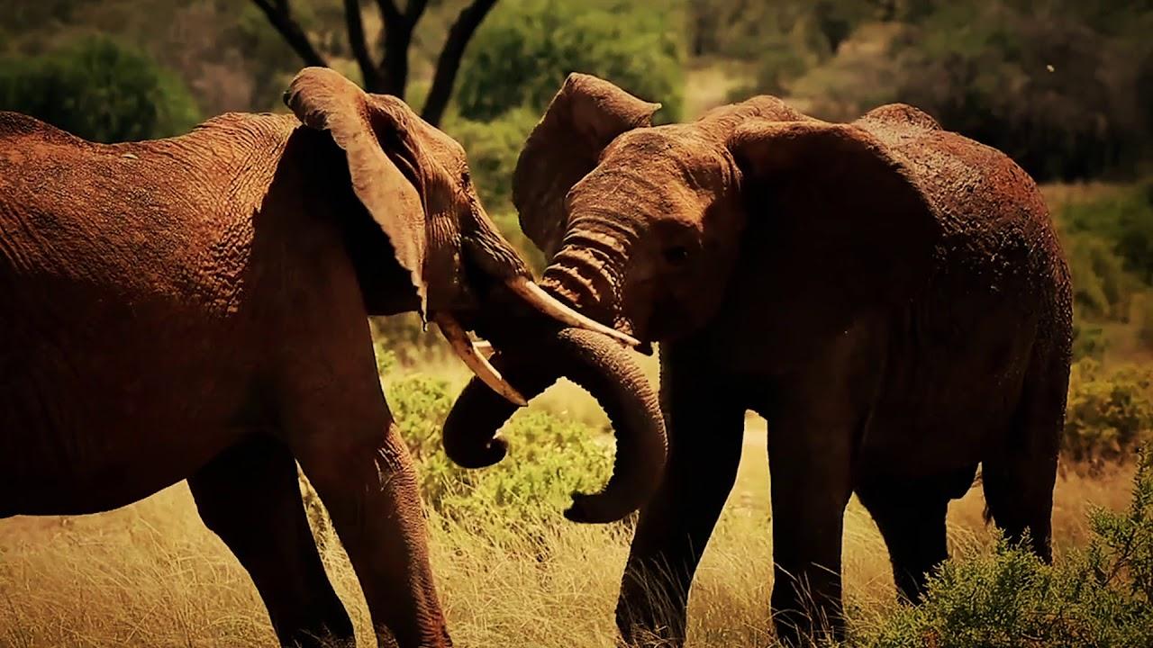 "Animal Society Ep 1 ""African Herbivores"""