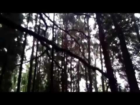 Bialowieza Forest National Park