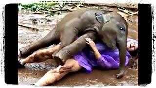 Приколы с Животными ДО СЛЕЗ | Jokes with Animals TO TEARS #638