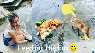 Lucas and Ivanita Feeding The Fox ❤️ @Lucas and Marcus @Ivanita Lomeli @Dobre Brothers