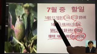 사과나무 생육및 관리(6~11월까지)