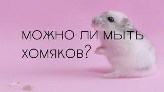 Можно ли мыть хомяков?🐹🏊