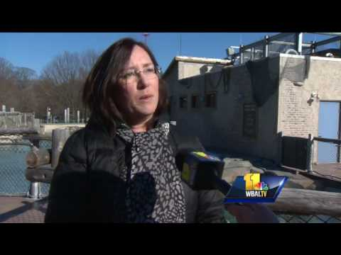 Video: Animals spring out at Maryland Zoo in Baltimore