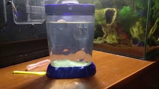 Sea-Monkeys день 8-й после запуска аквариума