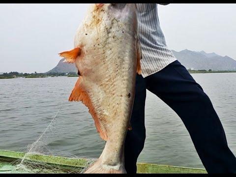 ลงข่ายล่าปลาใหญ่ต้นน้ำแม่กลอง 3 วัน 3 ตัว ไซต์ 10 โลขึ้นทั้งนั้นไม่ผิดหวัง Fishing Net Big Fish EP.1