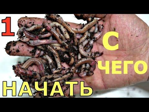 Всё о выращивании червей в домашних условиях. Как содержать и чем кормить червя  Часть1