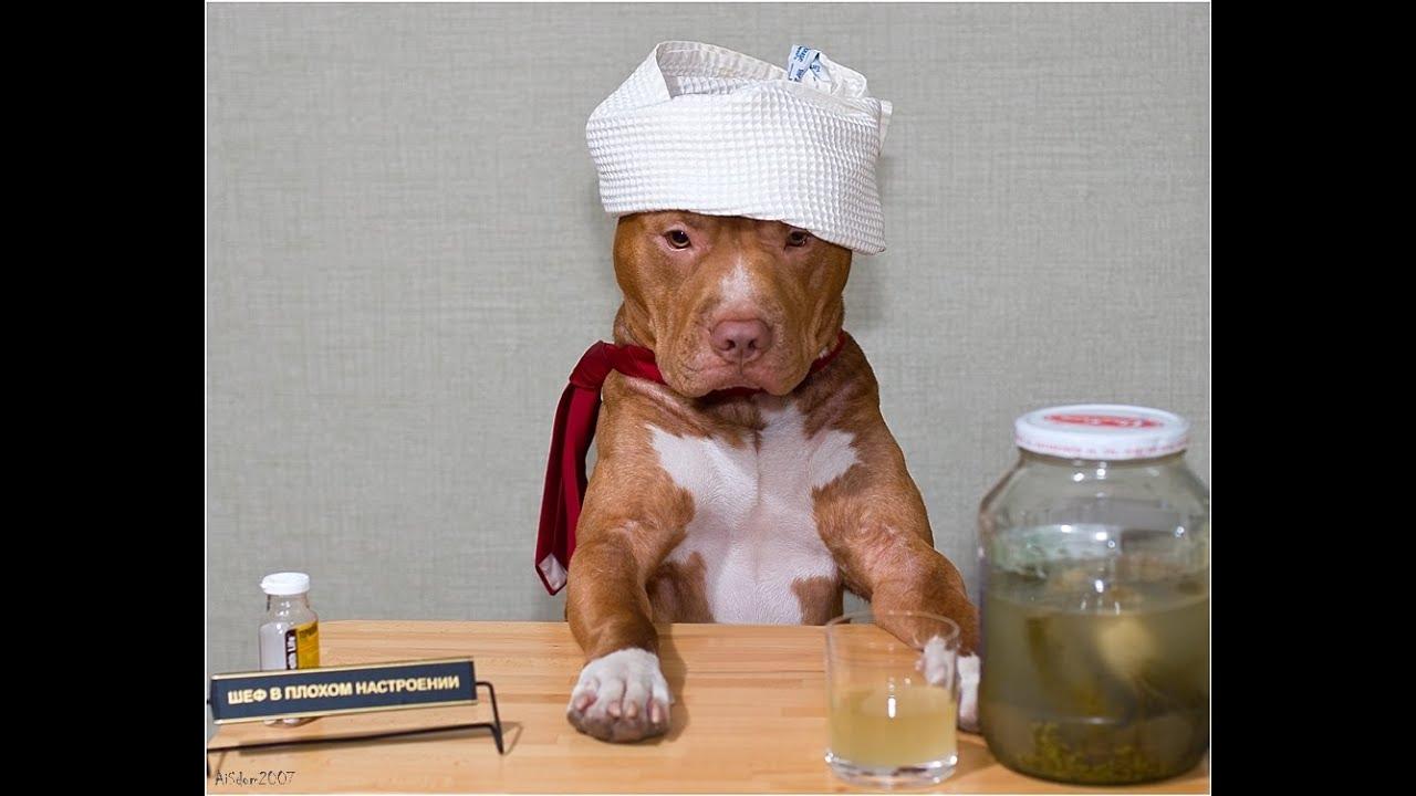 Картинки после пьянки выздоравливай, онлайн