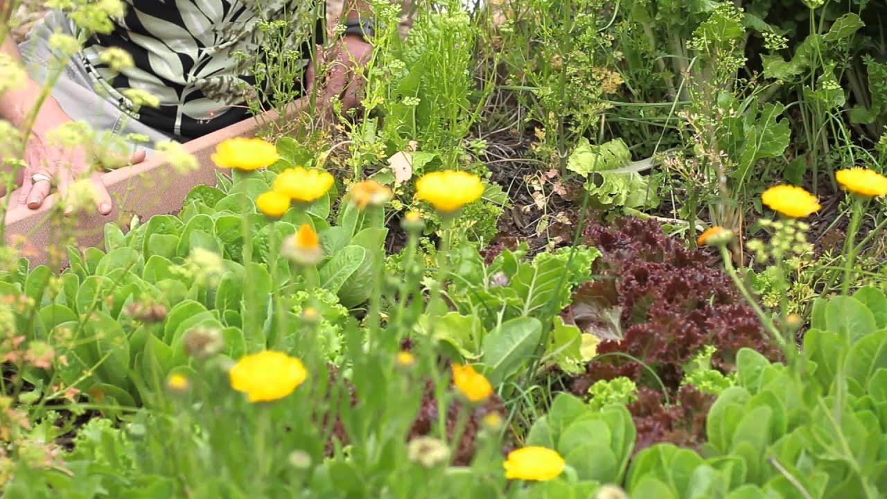 Lettuce Planting Instructions Green Savvy Youtube