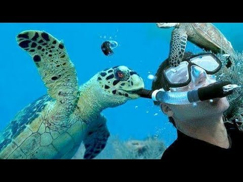 Did you know that TURTLES & TORTOISES can make you CRY FROM LAUGHING TOO HARD? - FUNNIEST VIDEOS