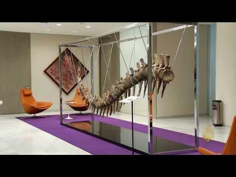 هذا الصباح- مزاد بالمكسيك لبيع ذيل ديناصور منقرض  - نشر قبل 3 ساعة