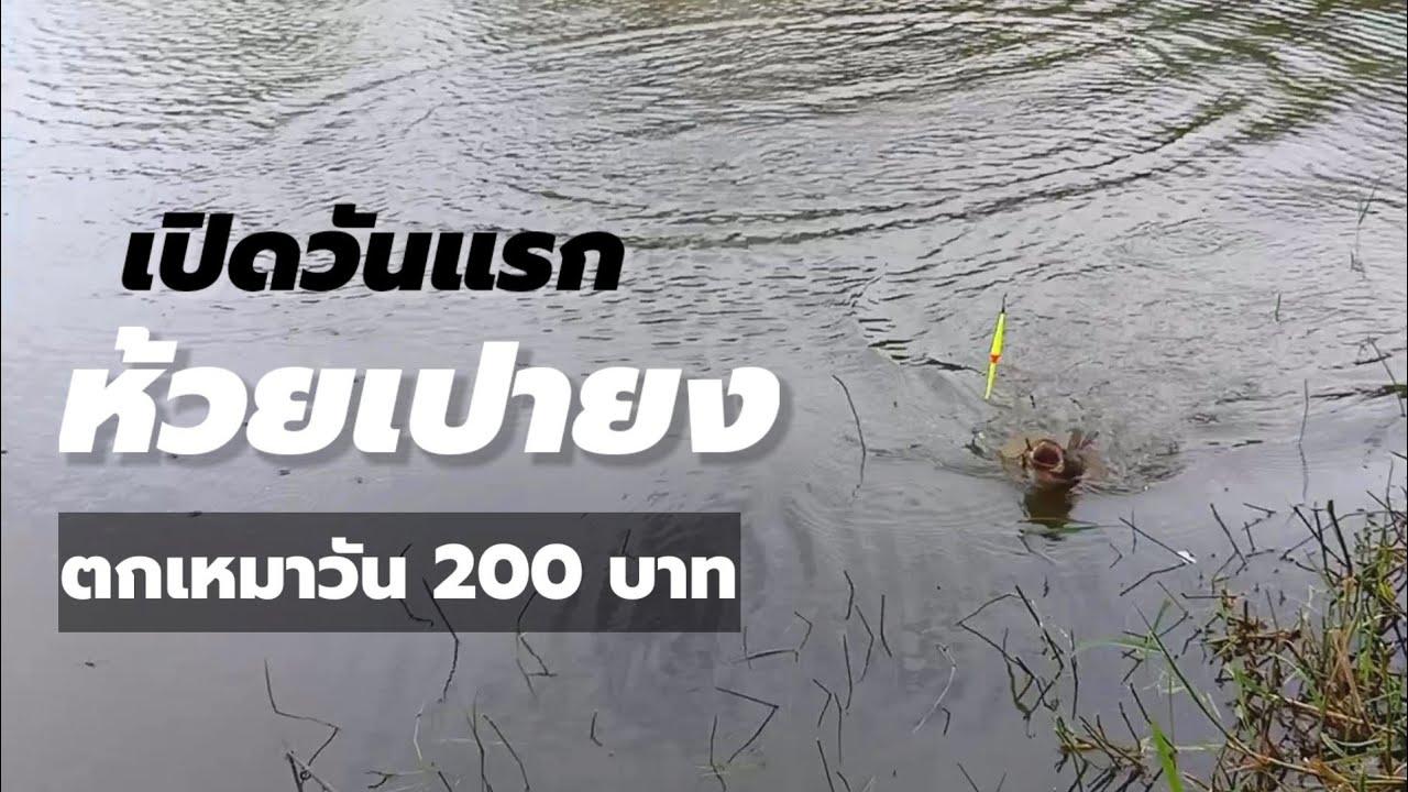 ตกปลาเหมาวัน 200 บาท เปิดวันแรก บ่อหมู่บ้านห้วยเปายง HD 🎏 EP187/AB-fishing Channel