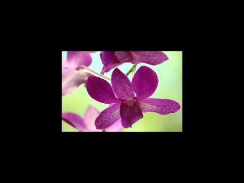 Scorpions - Still Loving You With Lyrics HD