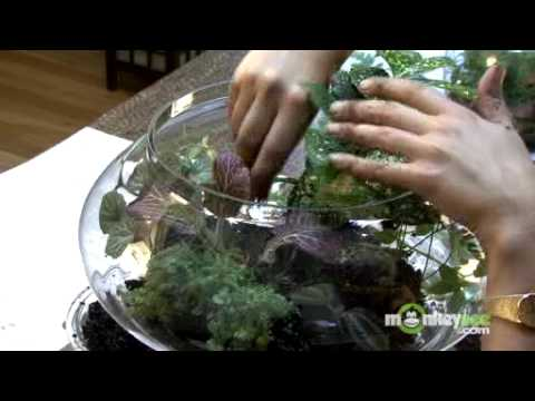 Build A Terrarium Arranging The Plants Youtube