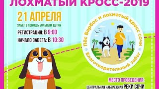 Пёс Барбос и лохматый кросс 2019 - Сочи - прямой эфир - VO Time
