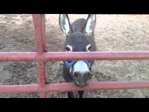 Donkey & cell phone