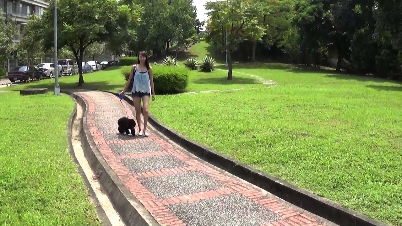 iPet愛寵GPS寵物追蹤器 - YouTube