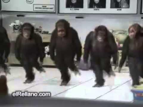 Lustige Affen tanzen!