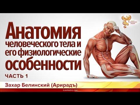 Анатомия человеческого тела и его физиологические особенности. Захар Белинский (Арирадъ). Часть 1