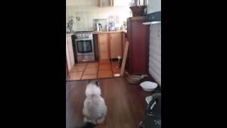 Кошка доедала сметану, застряла в стакане :D