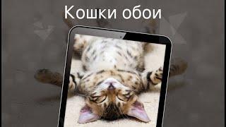 Кошки обои 4k