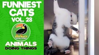 😺Try Not To Laugh Funniest Cats Vol. 28 | Animals Doing Things