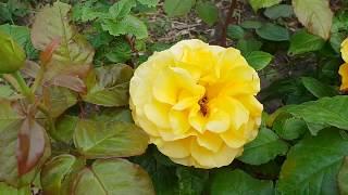 Анапа. Ореховая роща. Розовый рай.