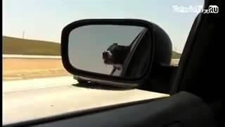 +100500 Оконная собака