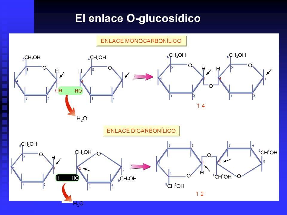 Enlace o glucos dico biolog a youtube for Definicion de beta