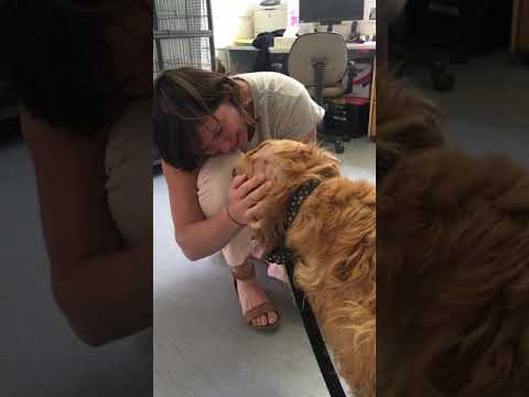 Dog reunited with owner at pound