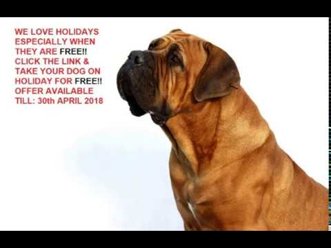 Free Dog Friendly Holiday Rental Uk
