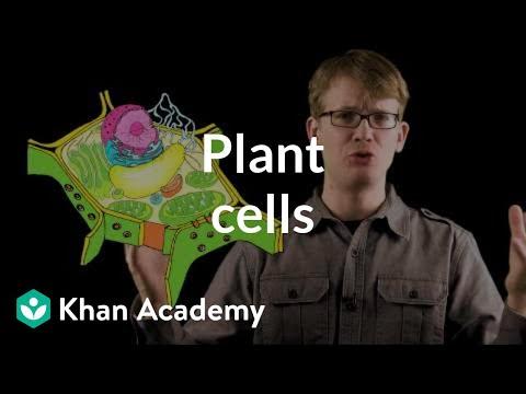 Plant cells | Crash Course biology| Khan Academy