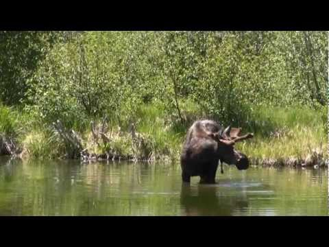 Yellowstone, Grand Teton National Parks June 2012