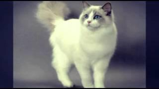 """Мой мини клип """"кошка беспородная"""""""