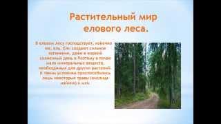"""Проект на тему: """"Природные сообщества. Еловый лес"""". Автор: Романов Андрей"""