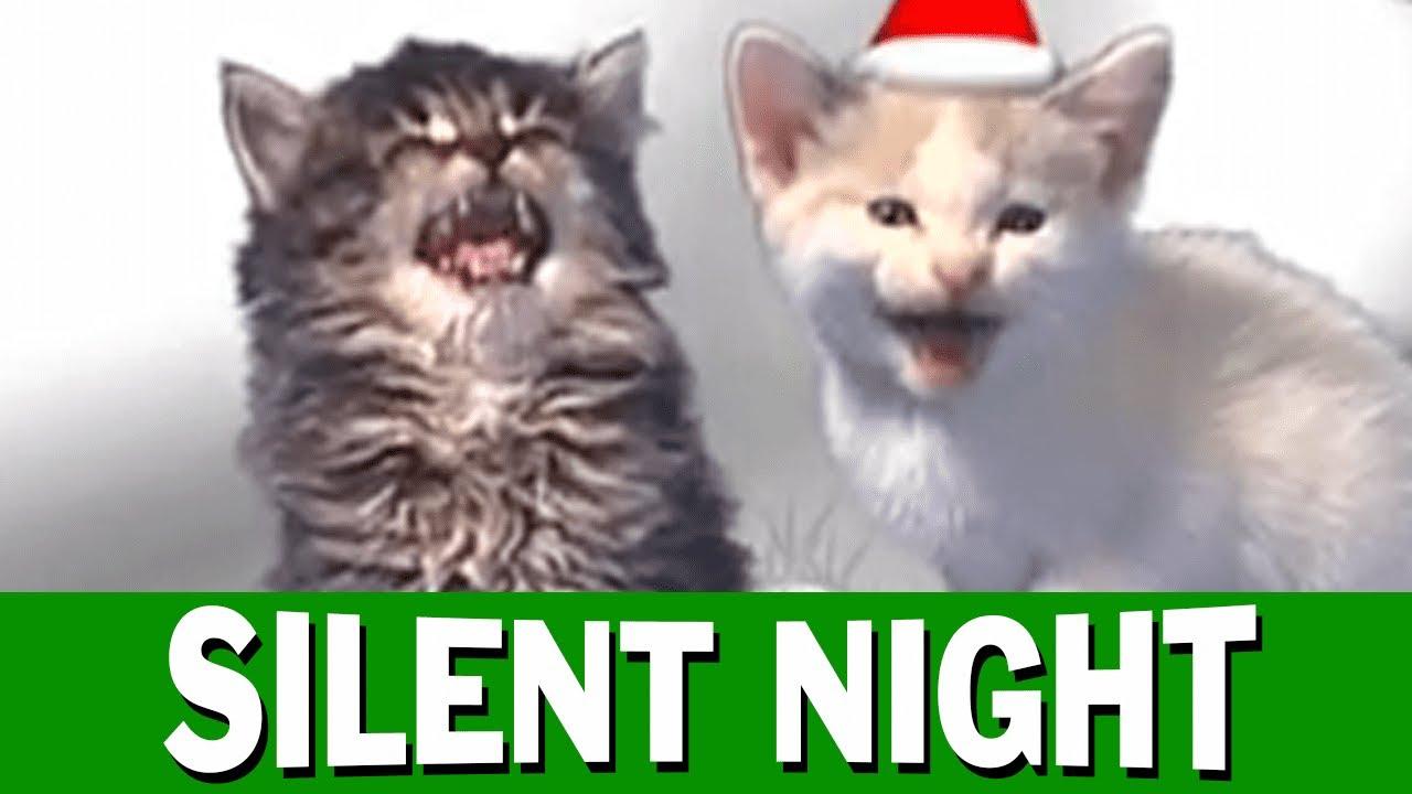 Christmas In July Cat Meme.Jingle Cats Silent Night