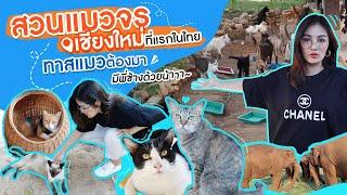 พาทาสแมวตะลุย CAT KINGDOM บ้านของน้องแมวกว่า 800 ชีวิต | ตามติดแตร