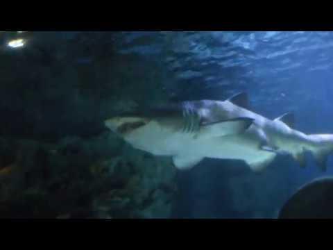 Forum Istanbul Aquarium