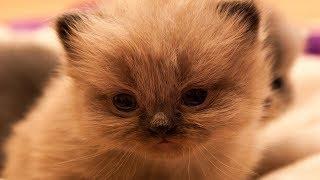 😸 Милые котики и самые смешные котята )