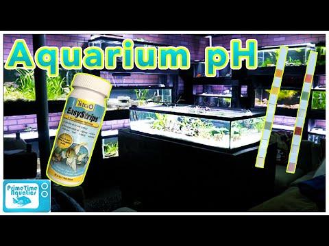 Aquarium pH: Everything You NEED to KNOW