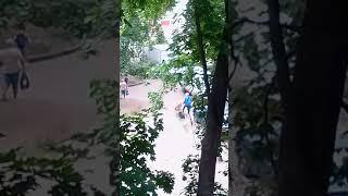 Сотрудники магазина ценрторг в Воронеже прикармливают бродячих собак а жители боятся выходить во дво