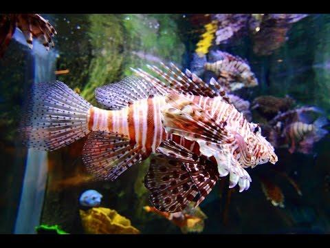 Dubai Aquarium & Underwater Zoo – Dubai Mall (1080p FullHD)