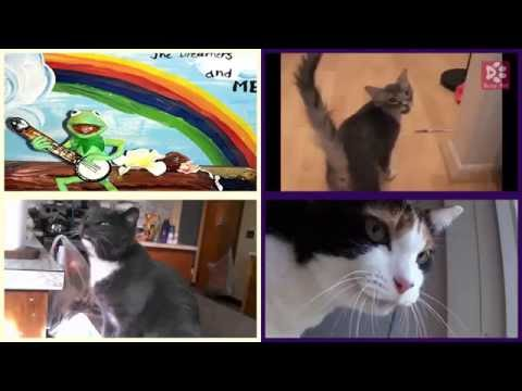 Cats Meowing RAINBOW CONNECTION [Kid's Song] (Acapella)