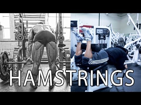 Lying Hamstring Curls MaX-Hype 101 Tutorials and Tips