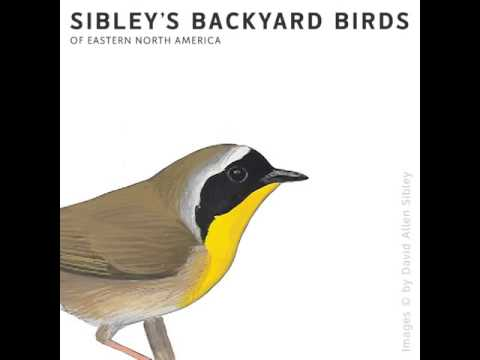 Sibley's Backyard Birds of Eastern North America