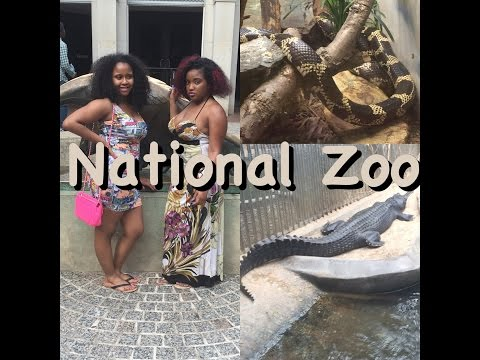 8. National Zoo [ Vlog ]