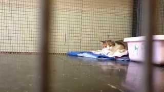 """Кошечка с признаками эпилепсии. Приют """"Суперкот"""""""