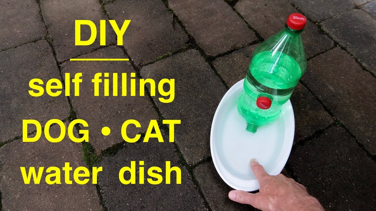 How To Make A Dog Cat Self Filling Water Dish Youtube