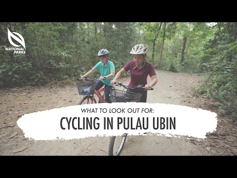 Cycling In Pulau Ubin What To Look Out For Youtube